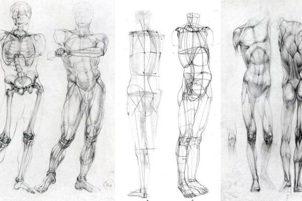 Cách vẽ người đẹp nhất – hãy làm quen với giải phẫu trước tiên