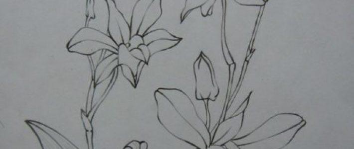 Kiến thức cần có để vẽ ký họa hoa lá