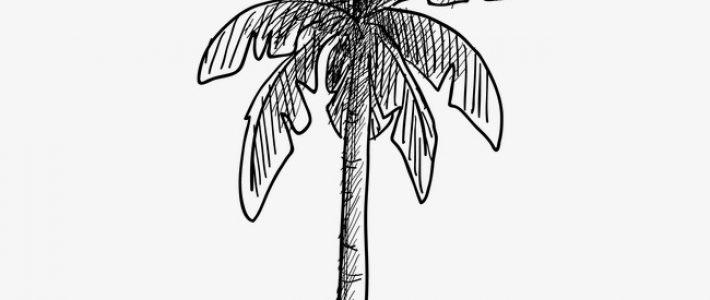 Kỹ thuật ký họa cây cối