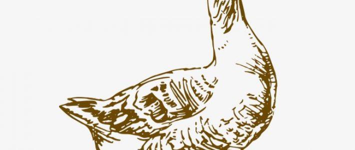 Tìm hiểu về ký họa con vật